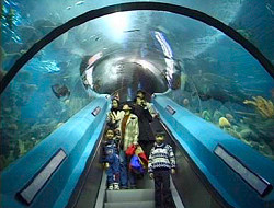 Guangzhou-Ocean-World3.jpg
